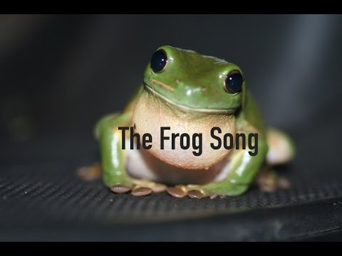 I Love you Frog official lyric video - YouTube
