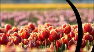 купить семена цветов почтой++(, 2017-02-14T08:51:58.000Z)