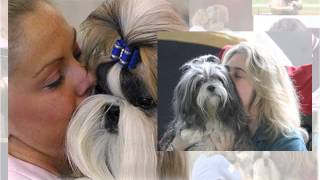 This Kiss This Kiss American Shih Tzu Club National 2009