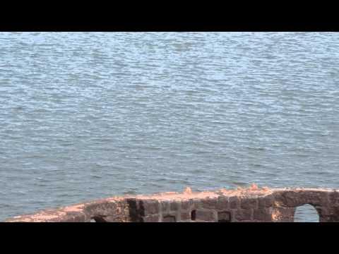 Dolphins at vijaydurg fort