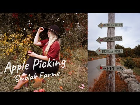 Apple Picking   Smolak Farms   Chapman Pie Recipe