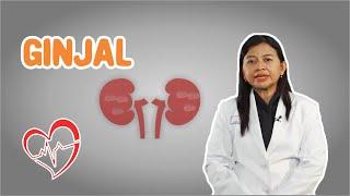 Berikut Ciri   Ciri Orang Terkena Penyakit Ginjal   Hai Dok