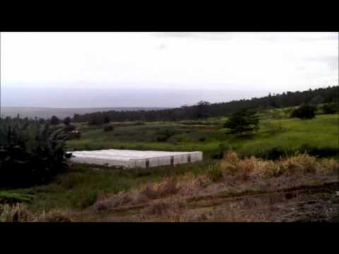 Walking Through Pahala Farm on the Big Island of Hawaii