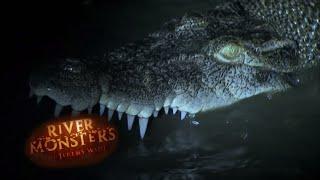 catch crocodile