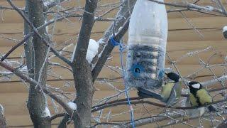★ Как сделать КОРМУШКУ только для СИНИЦ.Кормушка для птиц #своимируками из бутылки.Домик для синиц.