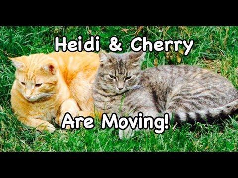 Heidi & Cherry Are Moving - Children's Bedtime Story/Meditation