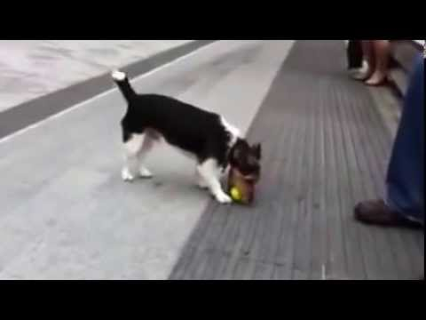 Cute Video –  Smart dog cutest video ever!