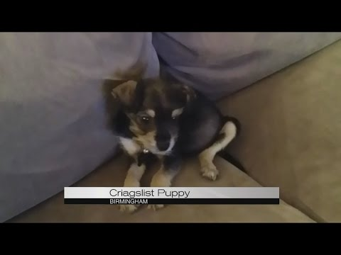 Craigslist Puppy Youtube