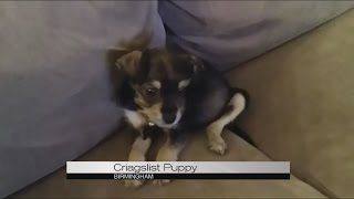 Craigslist Puppy Youtube Submitted 5 years ago by anthem40. craigslist puppy
