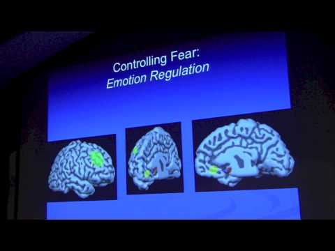 Elizabeth Phelps, PhD: Emotion and Decision Making