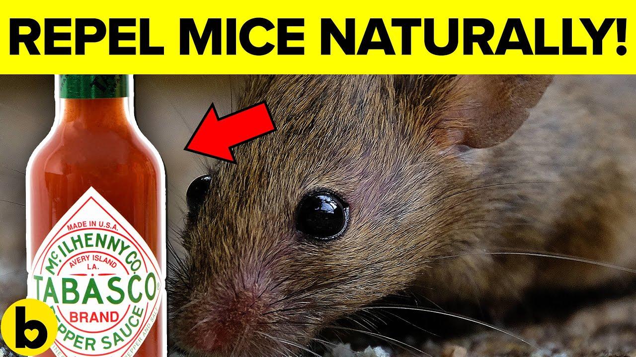 Natural remedies to kill rats