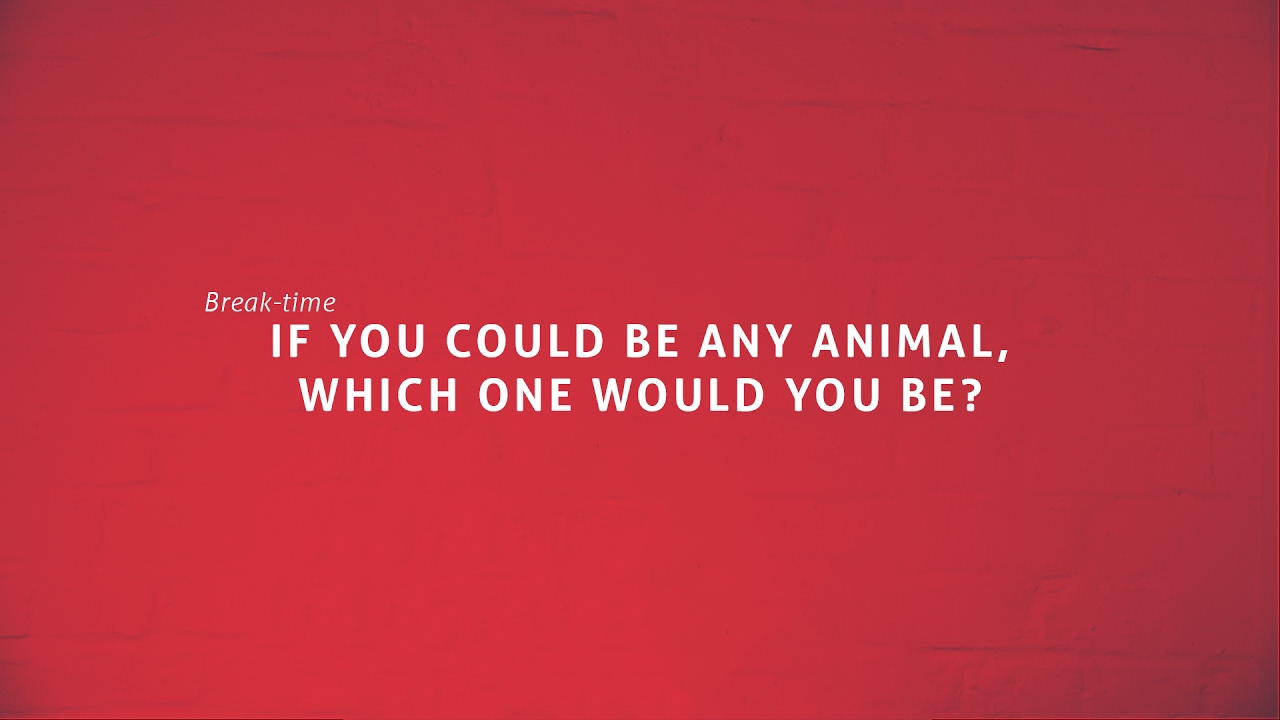 if you could be any animal which one would be if you could be any animal which one would be