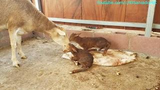 HERMOSO VIDEO!!! El milagro de la vida visto de primera mano. EL parto de Heidi