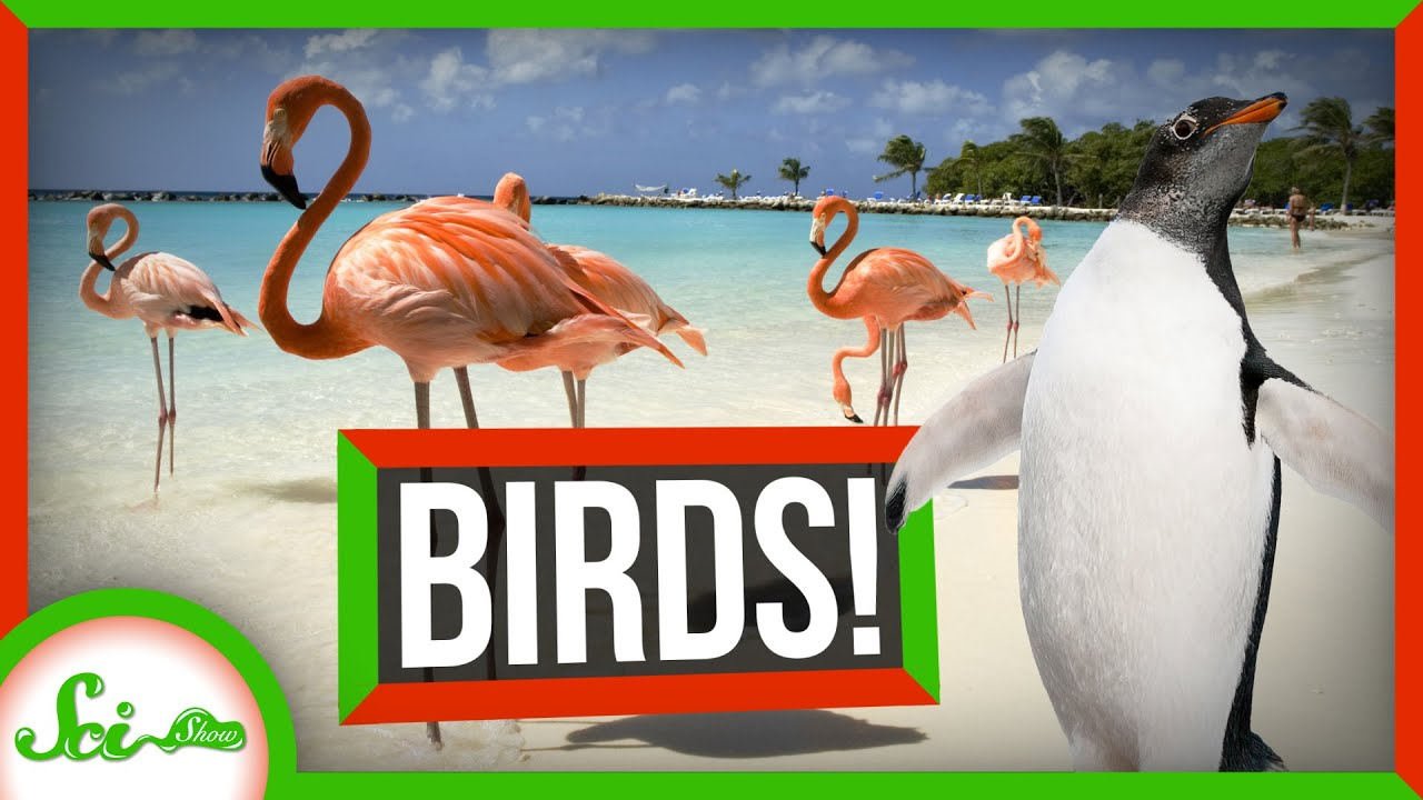 This One's for the Birds: Your Bird Questions, Answered   Compilation