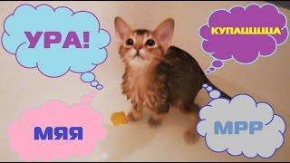 Котёнок Ариела знакомится с водой