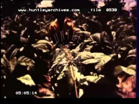 Zambia, 1960's - Film 8538