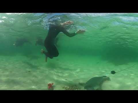 VR amazing sea lions at Baird Bay Eyre Peninsula SA