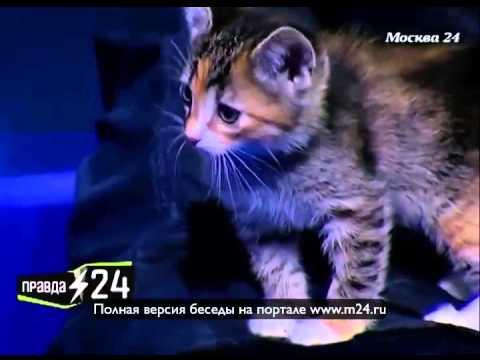 Ирина Безрукова репетирует с мужем Агнии Кузнецовой