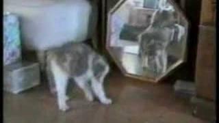 Koty, psy i nie tylko