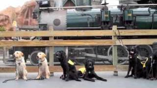 Puppy In Training Tv - Ep4 - Octa Service Animal Training