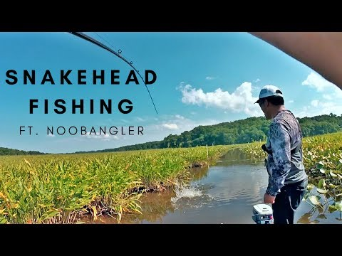 Fishing For Giant Snakehead On The Potomac River (Ft. Noobangler)