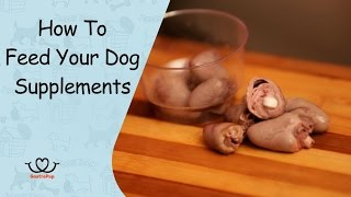How To Feed Your Dog Supplements | Supplements to gain weight  | Gastro Pup