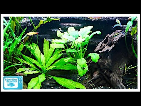 Beginners Guide to Aquatic Plants: How to Keep Plants in Your Fish Tank