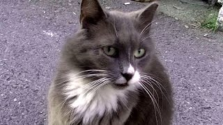 登録者さん向け動画内容です☆1匹の猫が私の後をついて来ました,,そして...