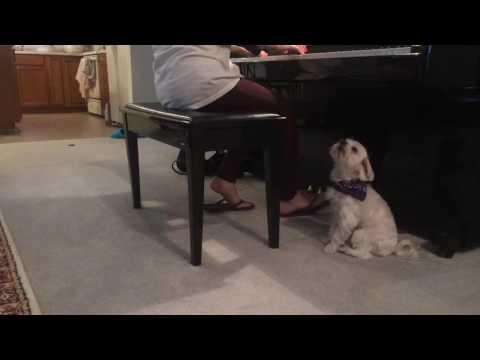 Singing Dog Simba Leo