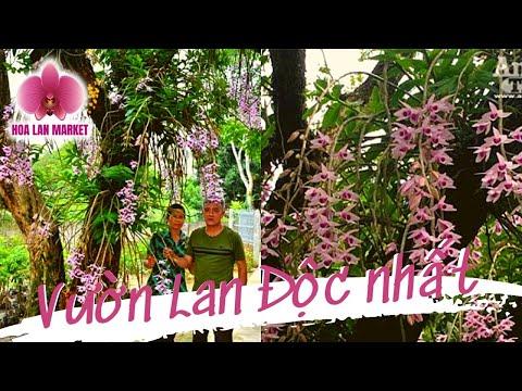 Hoa Lan TV: Chiêm Ngưỡng Vườn Lan Huyền Thoại Có Một Không Hai Ở Tuyên Quang (I)