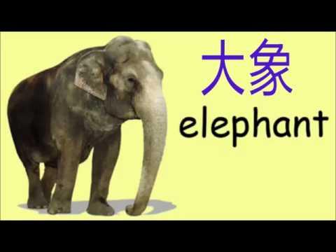 Học từ vựng - động vật (动物)