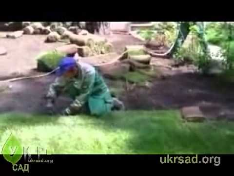 Как сеять газонную траву своими руками - YouTube
