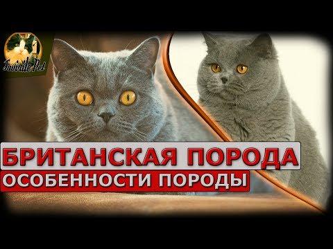 Вопрос: Насколько характер кошек зависит от породы?