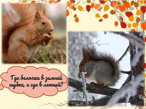 Как животные к зиме готовятся