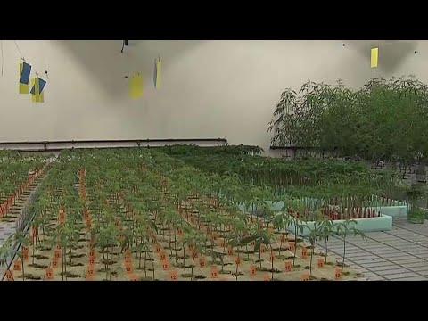 Aurora Cannabis opens first Montreal marijuana plant