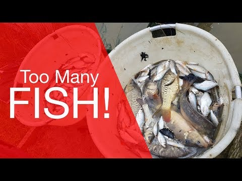 Too Many Fish! - Fishery Netting Vlog
