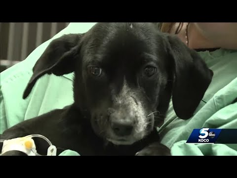 Emaciated puppies dumped on railroad tracks in Pottawatomie County