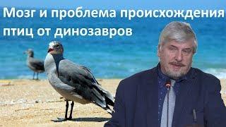 «Проблема происхождение птиц от динозавров»