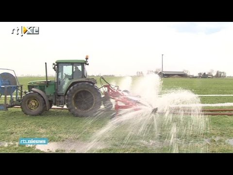 Oplossing tegen muizenplaag: verzuipen - RTL NIEUWS