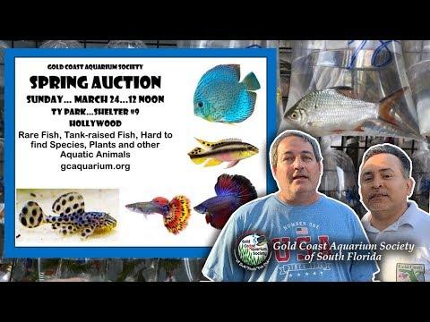 Gold Coast Aquarium Society   March 24 2019