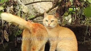 Kittens play-fight in Kerala