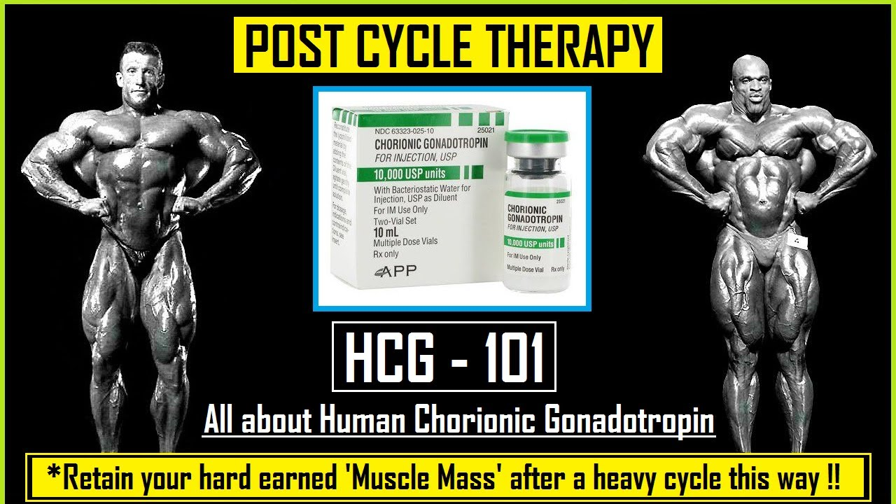 🔸HCG Explained l Human Chorionic Gonadotropin l Post Cycle Therapy (PCT)  for Bodybuilders