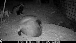 JUNE: Cubs playing at sett