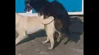 собаки среди белового дня делают спорт,G E.