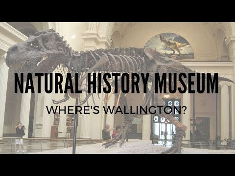 MUSEUM OF NATURAL HISTORY! (New York City)