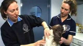 Battersea Dogs And Cats Home - Microchipping Your Pets