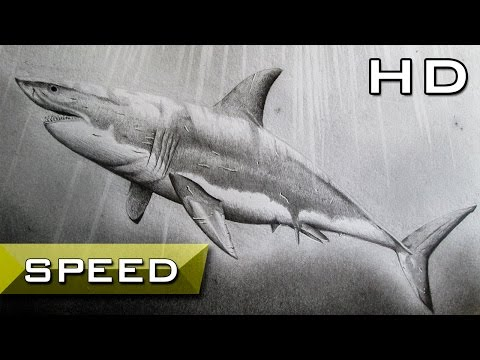 Speed Drawing - Great White Shark With Pencil - Timelapse