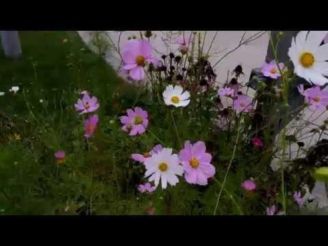 LG G3 Raw Ultra-High Definition Video
