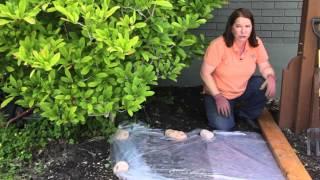 how to sterilize soil in the garden grow guru