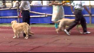 Dog Show in BARRACKPORE